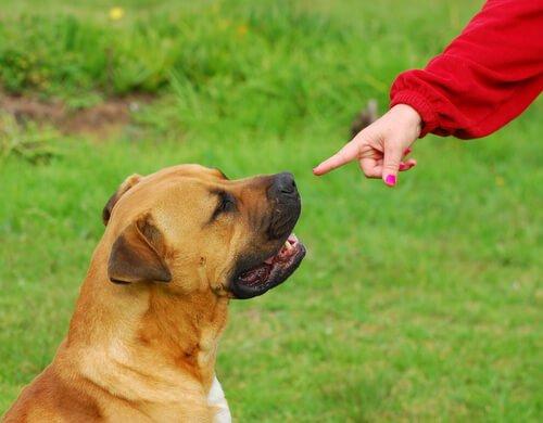 komutları duymayan köpek