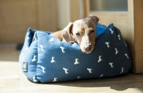 Köpeğin Yatağını Koymak İçin En Uygun 6 Yer