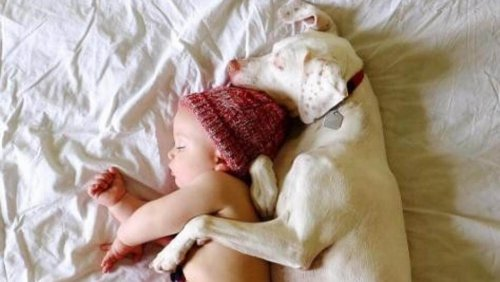 Hayvan İstismarı: Bir Bebek Köpeğe Yardım Ediyor