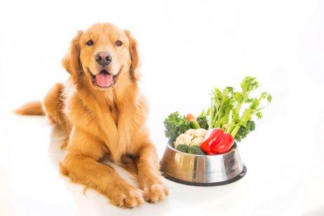 sebze yiyen köpek