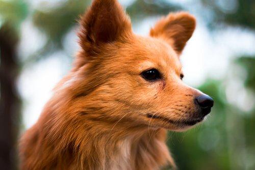 Köpek Burçları Nelerdir ve Hangi Özelliklere Sahiptir?