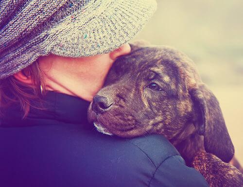Neden Köpeklere Bebek Muamelesi Yapmamalısınız?