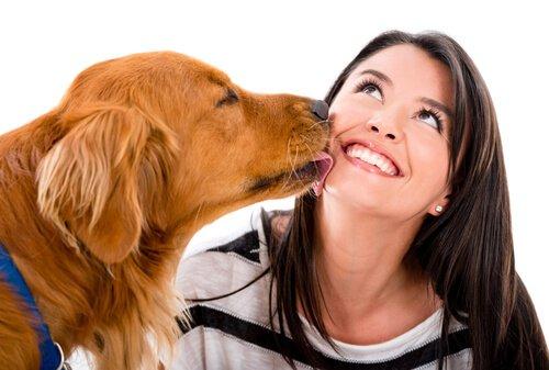 Köpeklerin Beden Dili: Sizi Sevdiğine Dair 8 İşaret
