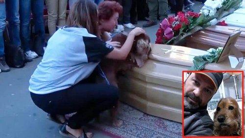 Köpeklerin Sadakati: Sahibini Terk Etmeyen Köpek