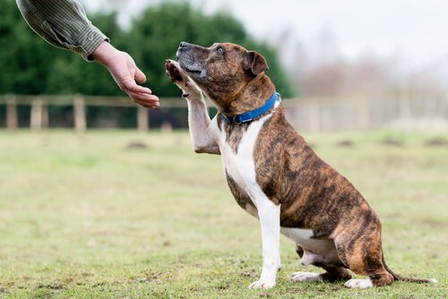 Köpeklerde Sağırlık Nasıl Teşhis Edilir?