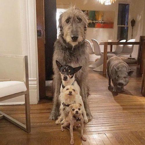 on köpeği sahiplenmek