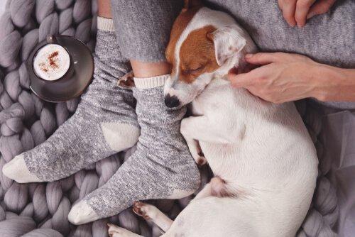 köpekler sevgisini nasıl gösterir