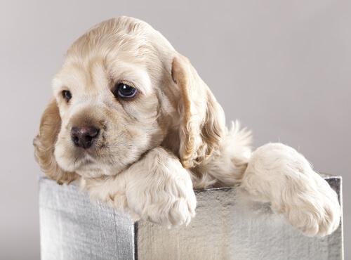 Yavru Köpek Aşk Hikayesi: İstemediğimi Sanmıştım