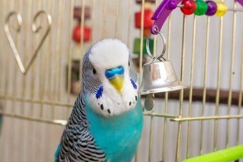 kafeste muhabbet kuşu