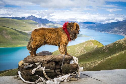 dünyanın en pahalı köpeği