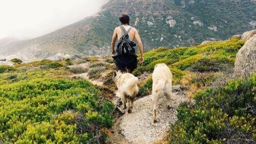 bir adam ve iki köpek