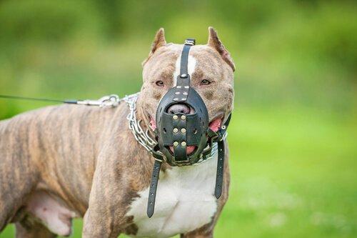 Tehlike Riski Olan Köpek Ne Anlama Geliyor?
