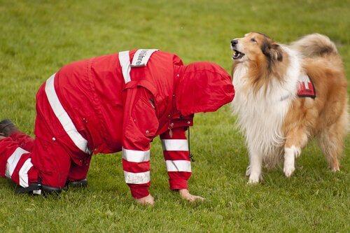 sahada kurtarma köpeği
