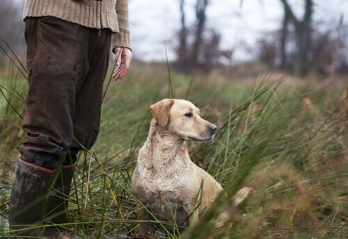 Av Köpekleri İçin Yunan Mitolojisinden İsim Önerileri