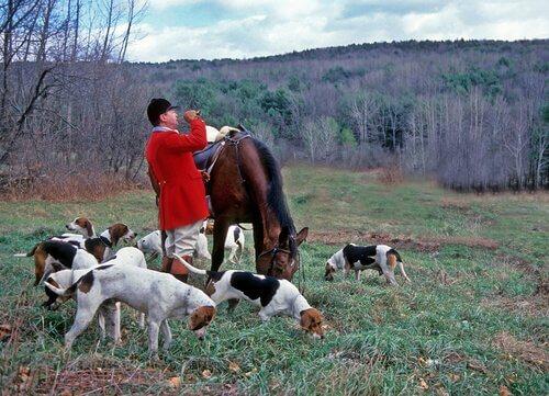 sahibiyle ava çıkan köpekler