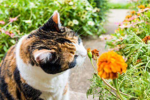 Kedilerin Sevdiği 8 Koku