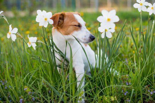 çiçekler arasında köpek