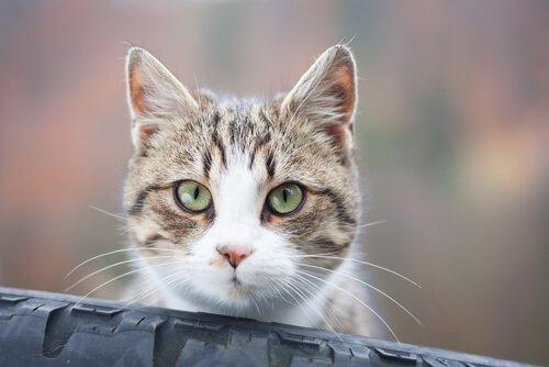 Kediniz Niçin Size Dik Dik Bakıyor?
