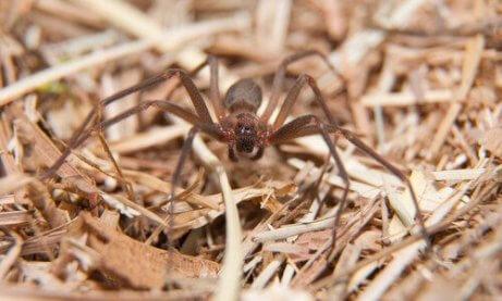 örümceklerden nasıl kurtulurum