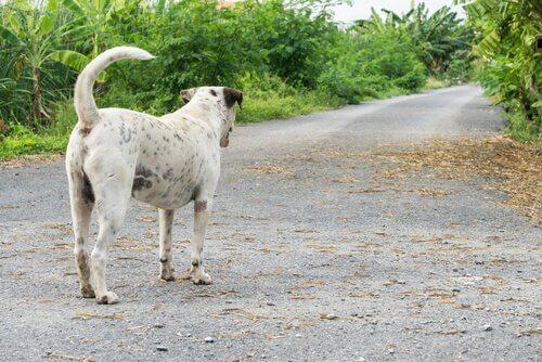 duran ve yola bakan köpek