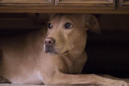 endişeli karma cins köpek