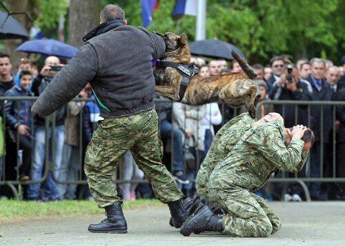 erkek polis köpekleri için isimler