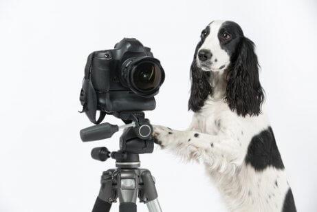 fotoğraf makinesinin yanında duran köpek