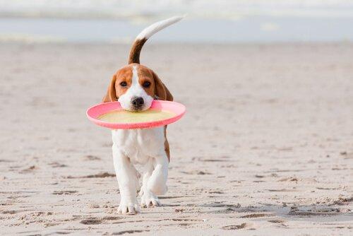 kumsaldaki köpek