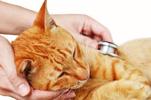Kedilerde Üst Solunum Yolu Enfeksiyonu: Nedenleri, Semptomları ve Tedavisi