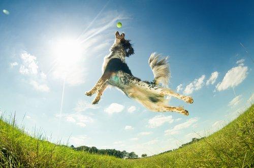 enerjik uyanan köpekler