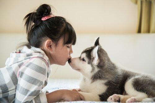 Evden Çıkamayan Yavru Köpeklerle Neler Yapabilirsiniz?