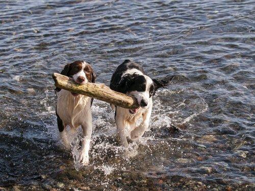 Hangi Cins Köpekler Köpeğiniz İçin İdeal Partner Olur