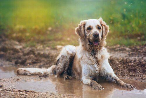 O Rahatsız Edici Islak Köpek Kokusu Nasıl Önlenir