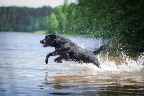 Kanoda Mahsur Kalan İki Köpek