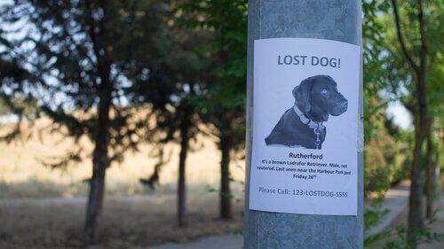 ormanda direğe asılmış kayıp köpek ilanı