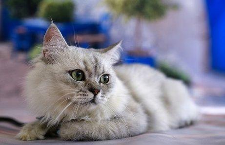 Kedi İletişimi: Kedinizi Dinleyin