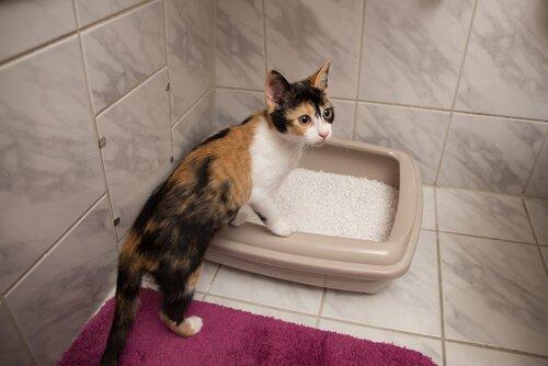 kedilerde tuvalet eğitimi