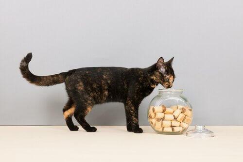 kediler için en iyi yiyecekler
