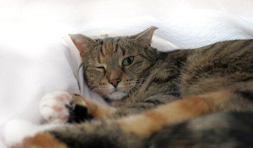 tek gözü kapalı kedi
