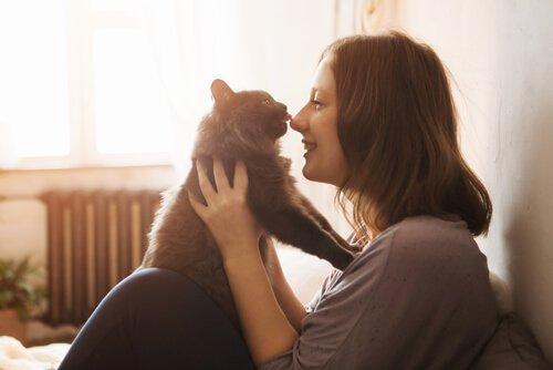 Eve Kedi Yavrusu Almak: İhtiyacınız Olan Şeyler