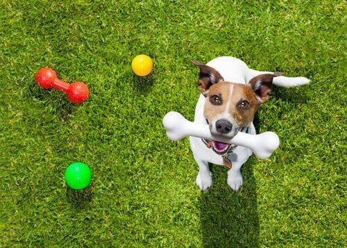 köpekler neden enerjik uyanır