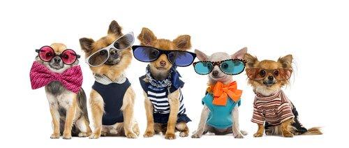 giysi giydirilmiş köpekler