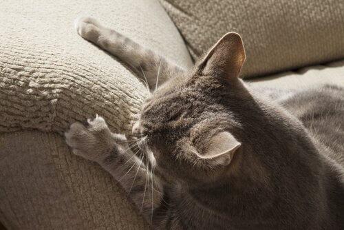 koltuğu tırmalayan kedi