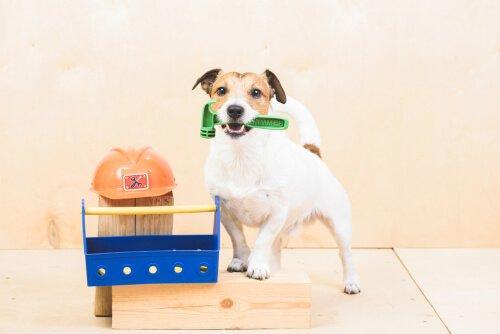 Köpeklere Komut Eğitimi: Neler Öğretebilirsiniz?