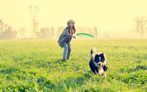 Köpeğiniz İçin Eğlenceli Aktiviteler: 9 Fikir