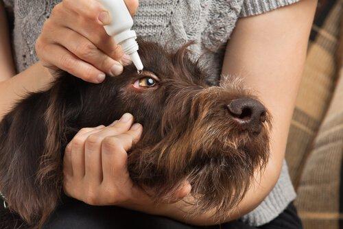 Evcil Hayvanlara İlaç Vermek Artık Çok Kolay