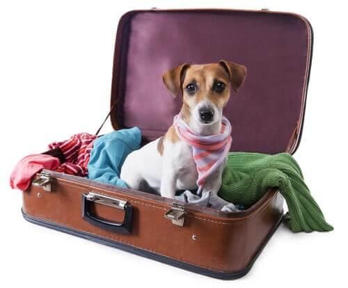 bavulun içinde kıyafetler ve köpek
