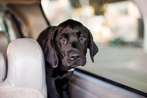 Arabada bir köpek yavrusu