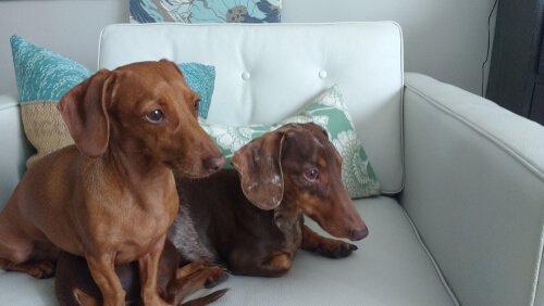 İki köpek birbirleriyle vakit geçiriyor