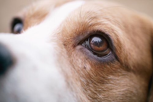 güzel gözlü köpek